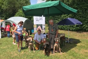 Tag des Hundes in Pfeffenhausen